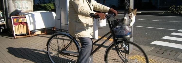Японские велосипеды – история развития, топовые марки